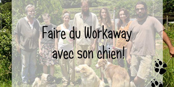 workaway avec chien