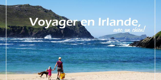 iralande Voyage chien