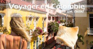 voyage colombie chien